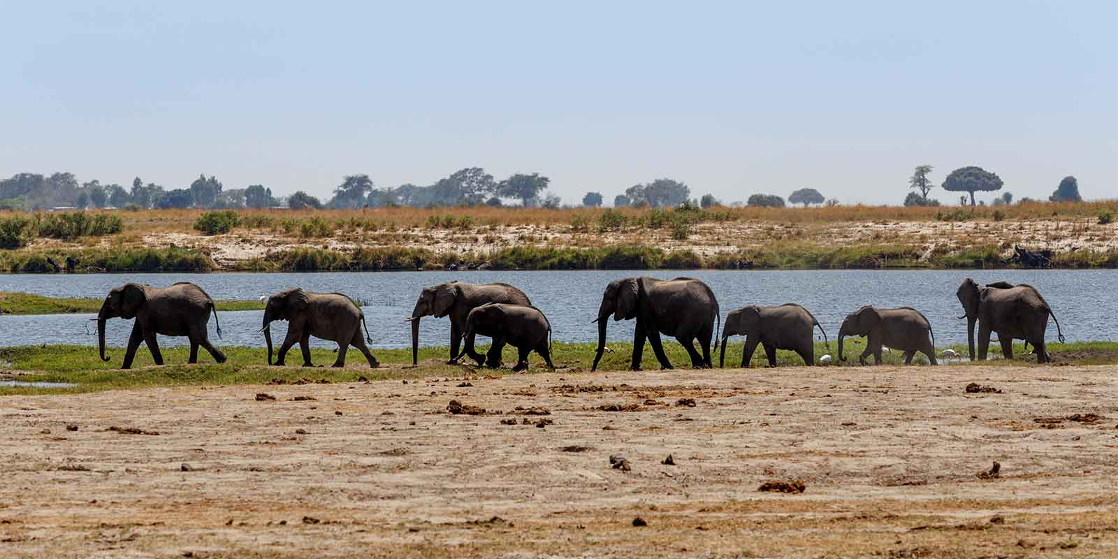 Family of elephants walking next to river in Botswana