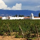 Vineyard and church in background at Mendoza, Argentina