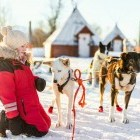 Young girl with husky dogs waiting to go on a winter dog sled in Norway