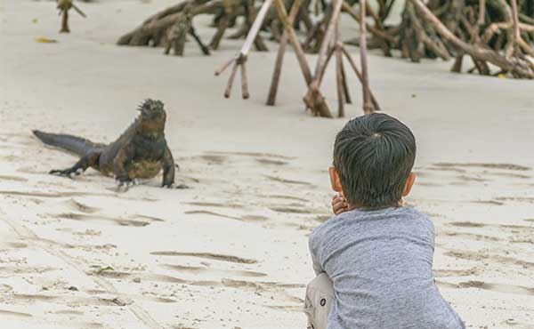 Young boy watching iguana on beach in Galapagos Islands